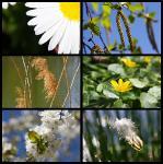 collage-natur-dutzendteich-petra