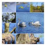collage-natur-dutzendteich-dagmar